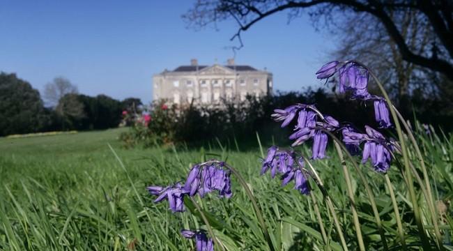 Castle Ward Gardens