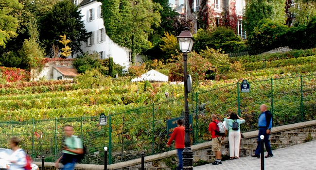 Vines and the City: Urban Vineyards are a Growing Trend