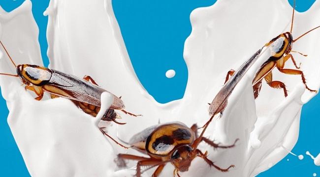 cockroach-milk