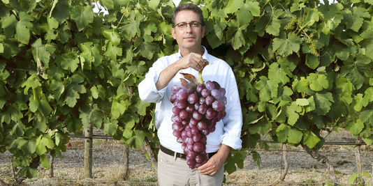 Jean-Michel Boursiquot | Familiar Grapes New Terroirs When Leaving the Comfort Zone Pays Up for Wines