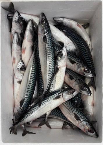Asia Market fish