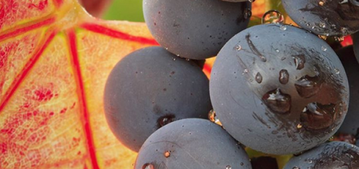 How do you Like them Grapes? Grenache vs Garnacha