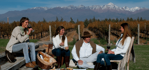 Top Ten Malbecs from Argentina for World Malbec Day | Malbec Wine