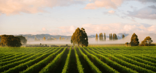New Zealand Wine Exports to the USA Broke Record Sales and Surpassed €450 Million