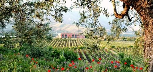 Etna Wines, Taste Sicily's Volcanic Treasure