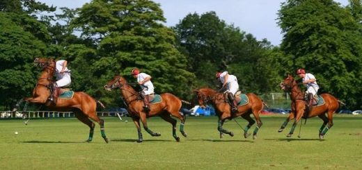 Polo in the park