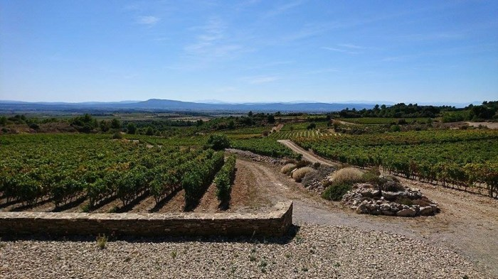 Field of Dreams A Spiritual Quest to Reimagine the Languedoc 14