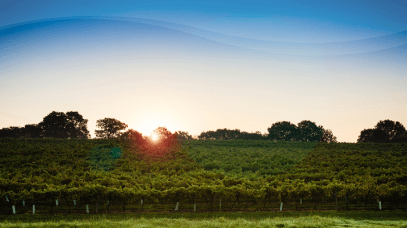 Venture Into these 5 Wine Regions that are Perfect for a Short Escape from Ireland