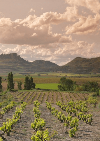 Venture Into these 5 Wine Regions that are Perfect for a Short Escape from Ireland bordeaux wine tourism