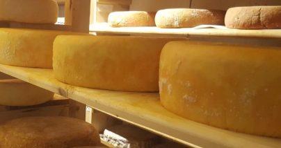 Cheese maturing