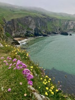 Carrick a rede view
