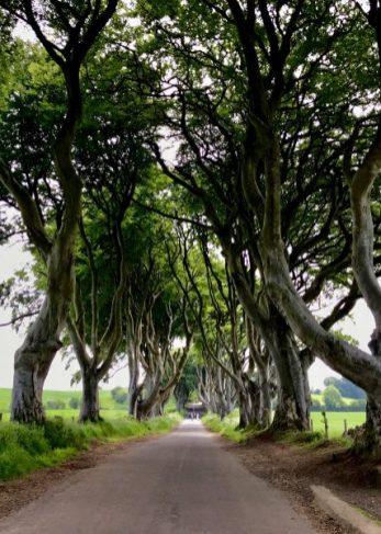 Dark Hedges Game of Thrones Northern Ireland