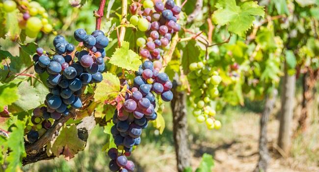 The Forgotten Wine Island – Madeira