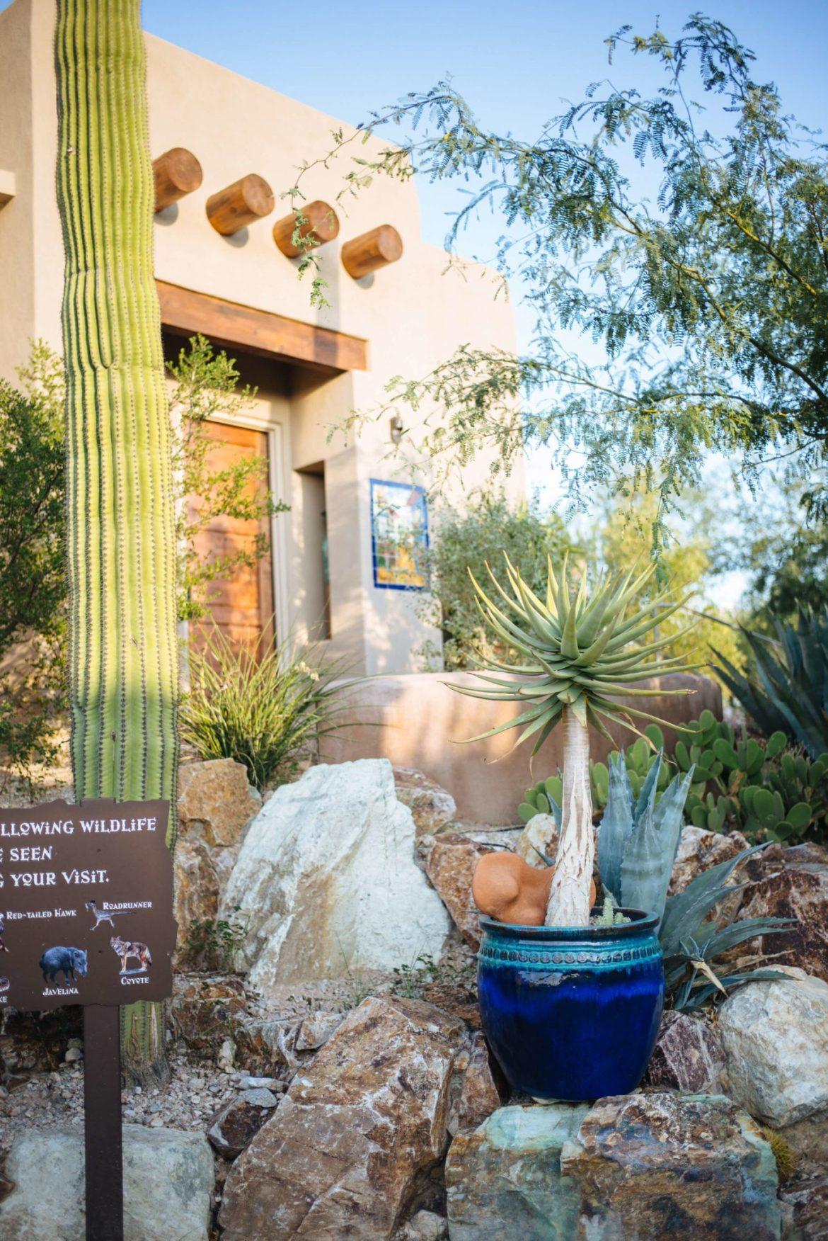 Cactus and signs of wildlife at the Hacienda del Sol, Tucson Arizona, The Taste Edit