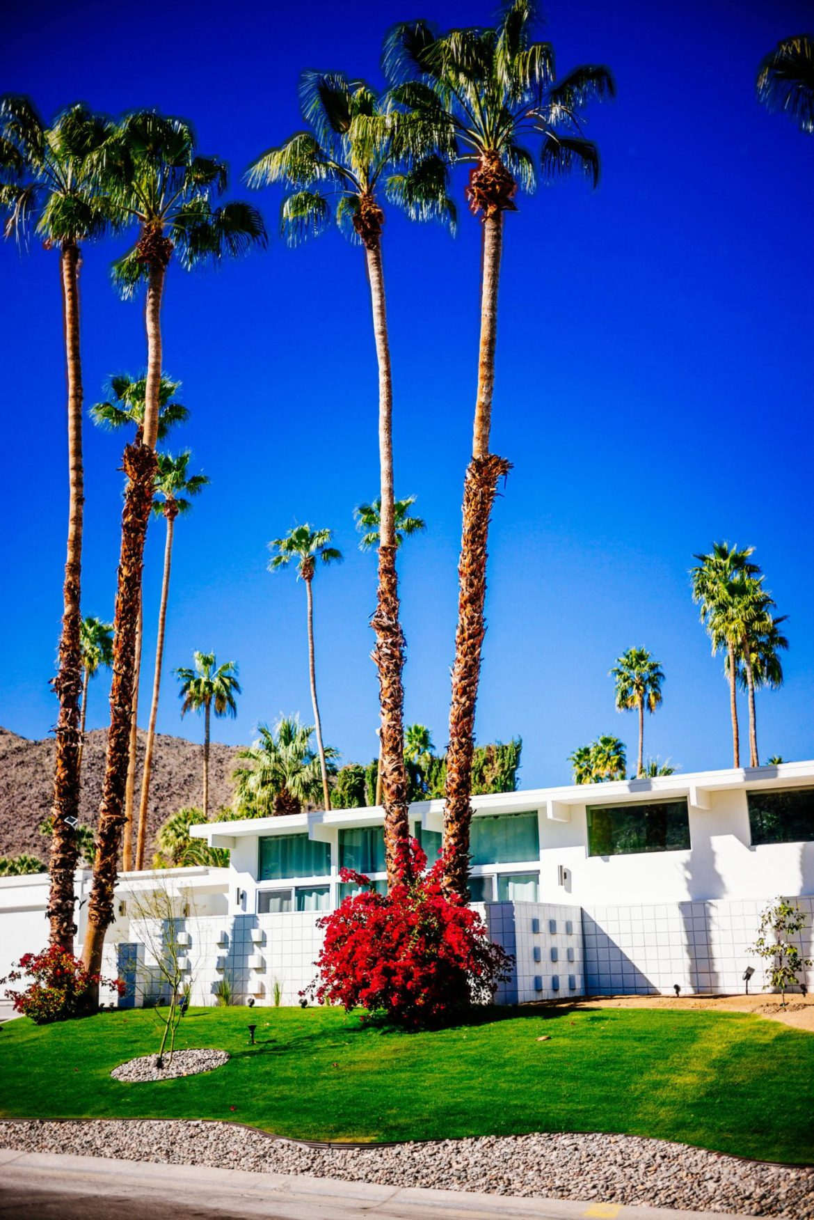 : Tour the beautiful Mid Century Homes in Palm Springs, The Taste Edit
