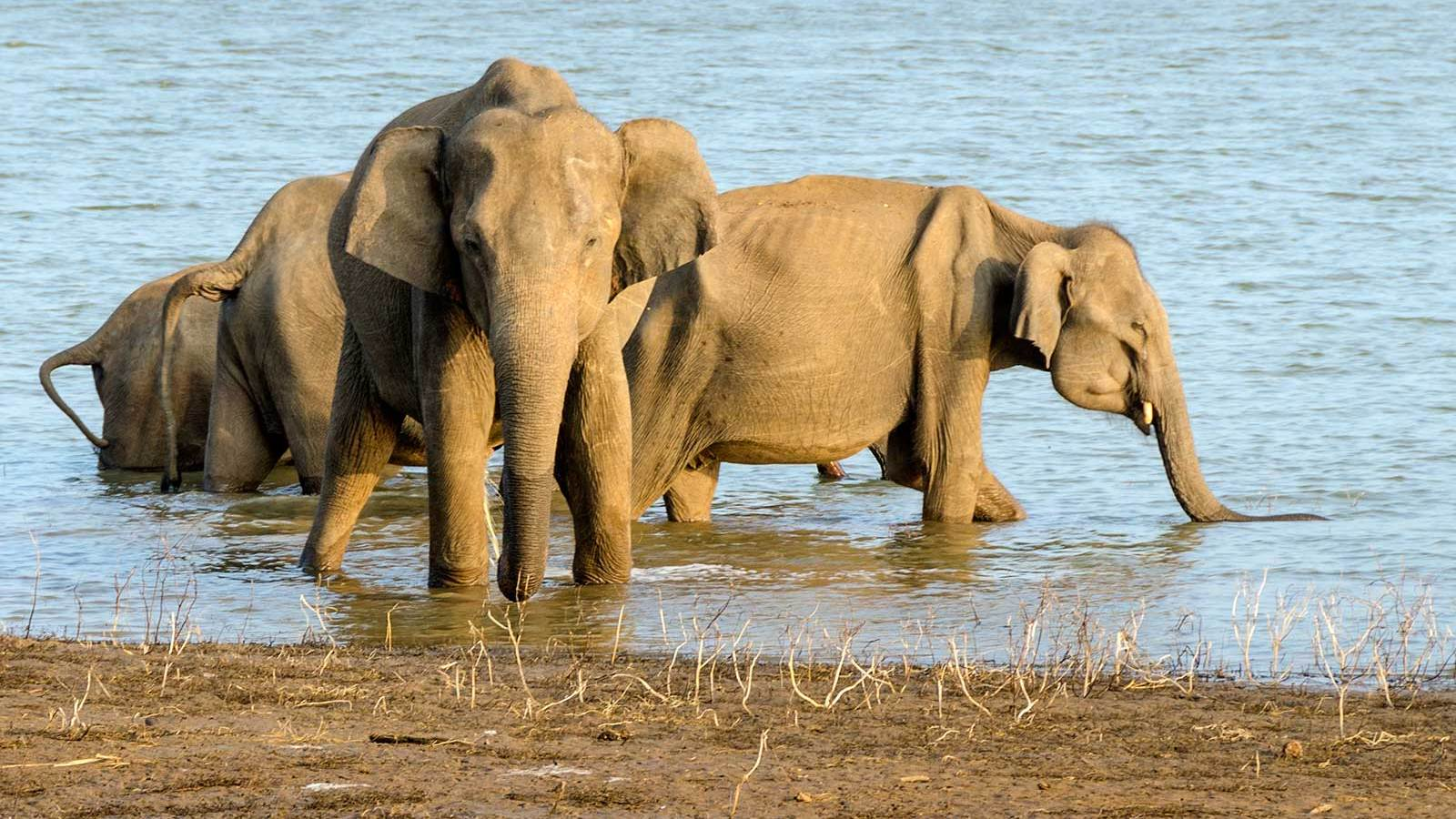 Where can you see the elephants in Sri Lanka?