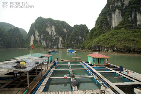 A floating Fish Market in Halong Bay, Vietnam