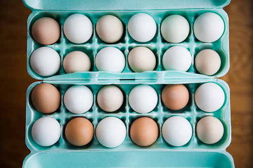 Farm Fresh Eggs vs Conventional Factory Farm Eggs – a Photographic Comparison