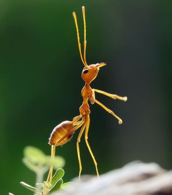 A Big Life Lesson Taught by Some Ants, Named Ferdy