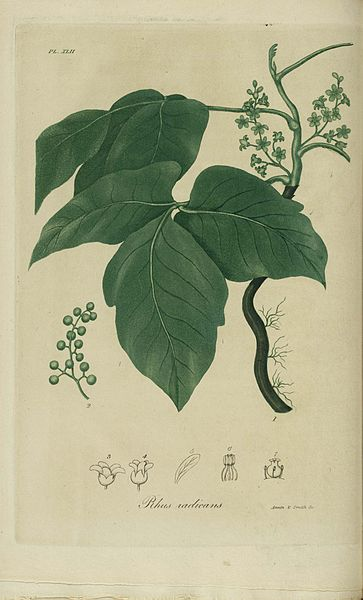 What Poison Ivy Taught Me about the Dharma