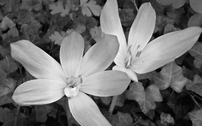 Wordless Wednesday: Black and White Wednesday…