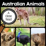 australian-animals-close-read