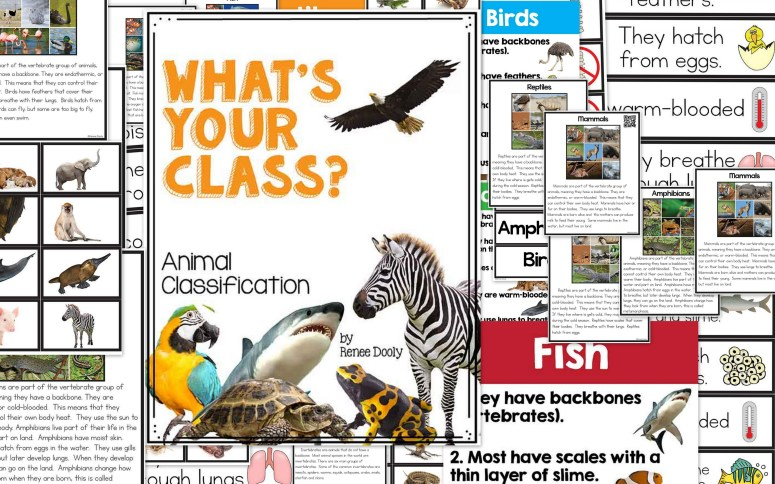 animal classification collage