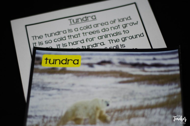 polar bear picture vocabulary cards
