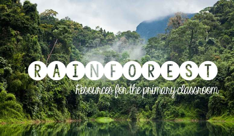 Rainforest Ideas and Resources