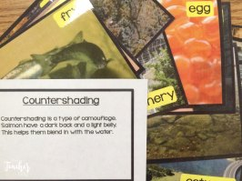salmon picture file cards- great for vocabulary