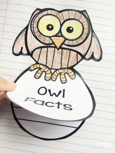 owl facts flip book in a notebook