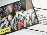 Owl picture file vocabulary cards