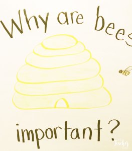 why are bees important anchor chart