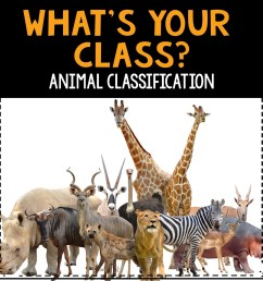 What's Your Class? Animal Classification - The Teacher Bag [ 1687 x 1687 Pixel ]