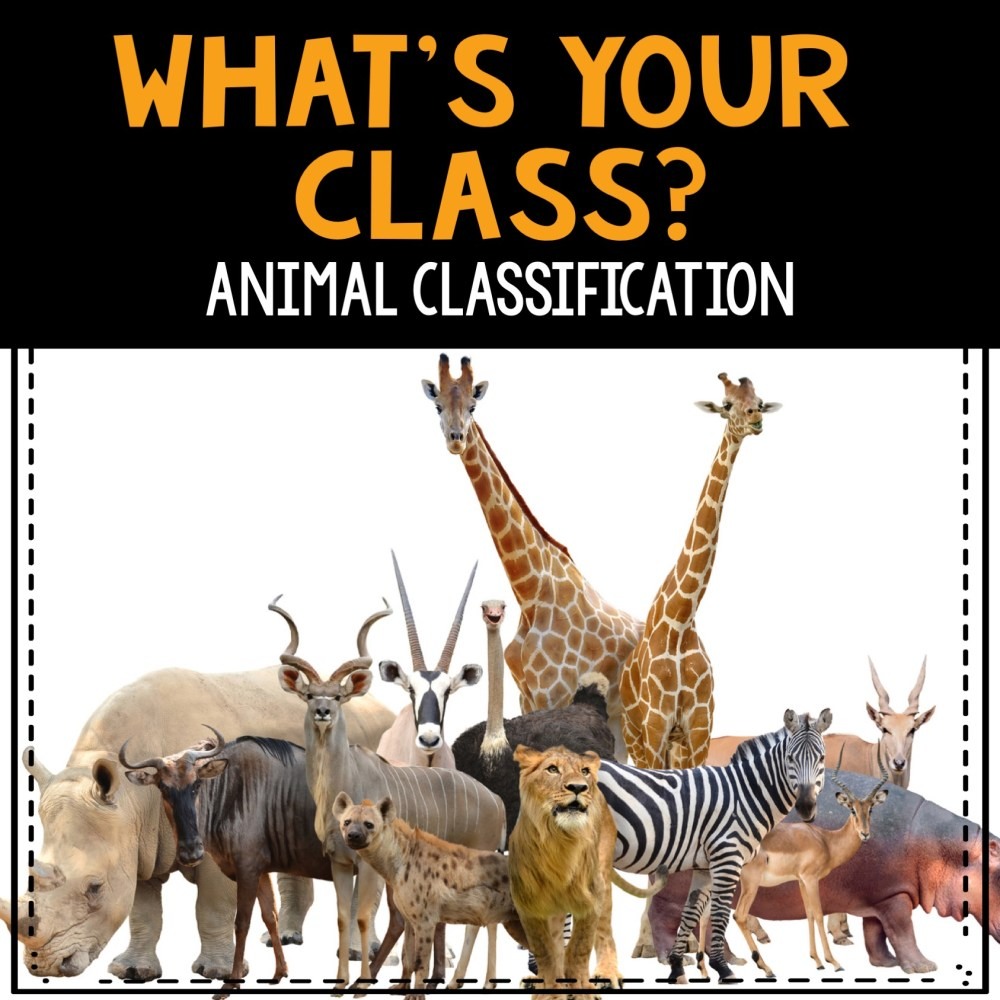 medium resolution of What's Your Class? Animal Classification - The Teacher Bag