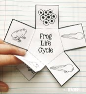 frog-interactive-notebook
