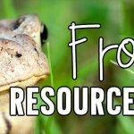 Interactive Frog Resources for the Classroom