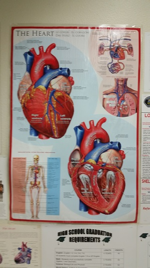 Valentine's Day Heart…Dissection That Is! | The Teacher Team