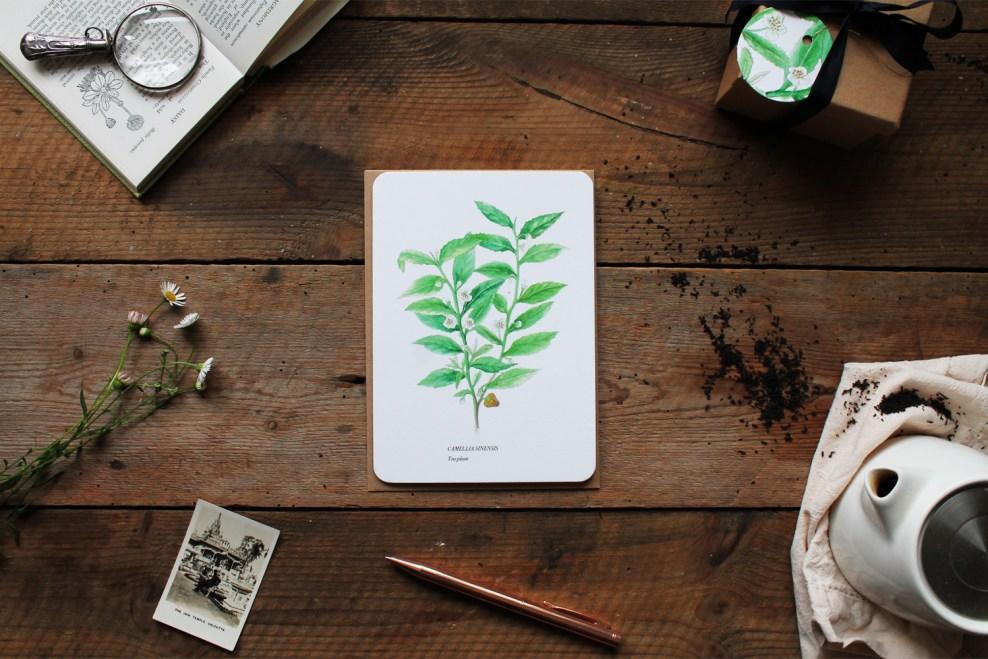Tea Plant Illustration Greeting Card