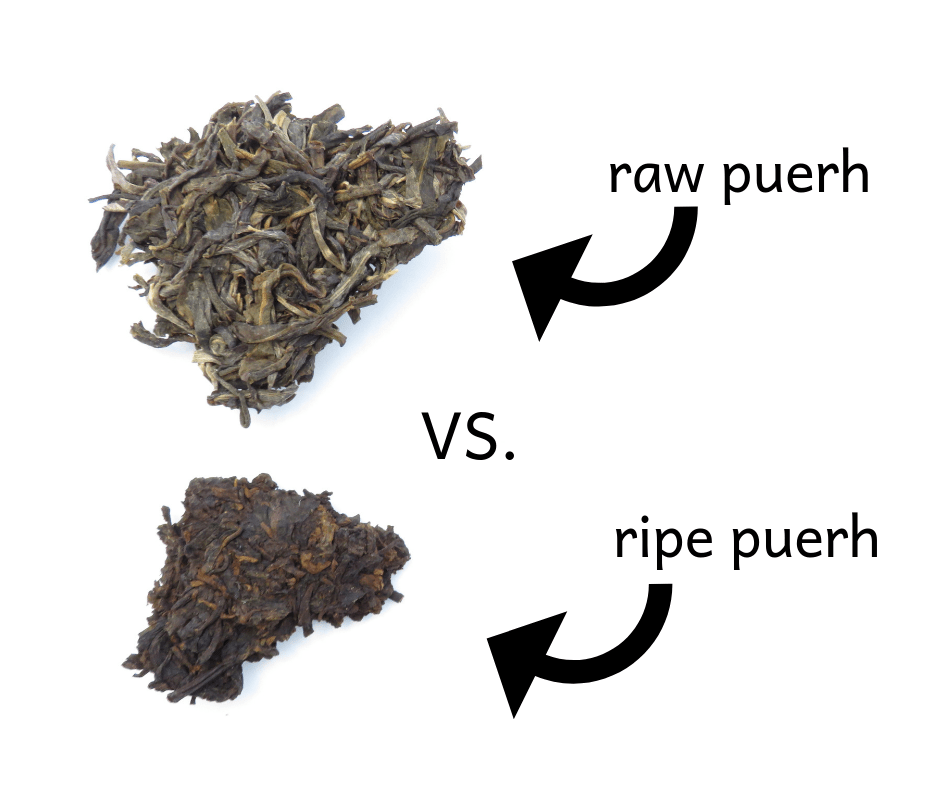 raw vs ripe puerh | The Cup of Life