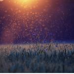 Blue flowers under a sunrise