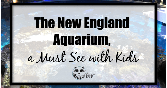 The New England Aquarium, a Must See with Kids
