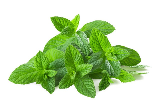 http://store.elmwoodinn.com/peppermint-tea.aspx