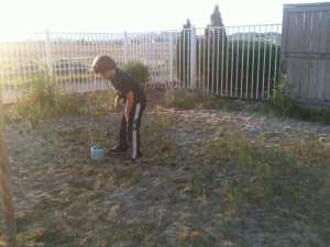 Thomas Pulling Weeds 5.10.12