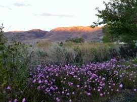 Team TLC Walk Damonte Ranch July 22 2016 #13