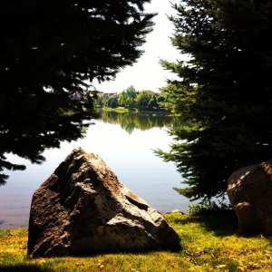 reflection-of-trees-at-lake-2016-2