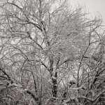 Winter Wonderland Walk Vintage 1.12.17 #5