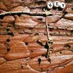 Tree Bark Rock Art Love is the Key April 2017 #2