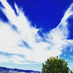 Dragon and Angel Wings and Bird Wings Vintage Lake May 2017