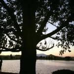 Team TLC Sunset Walk Vintage Lake 8.11.17 #6